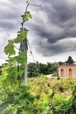 Realizzazione Siti Internet - Azienda Agricola La Roccaia