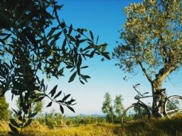 Realizzazione Siti Internet - In- Tuscany